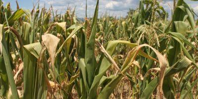 Ponta: Guvernul va acorda despagubiri pentru terenurile afectate de seceta