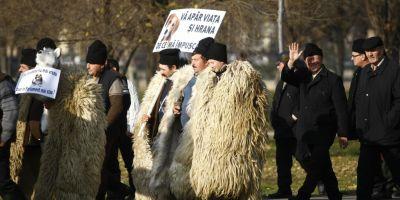 Guvernul este de acord ca oierii sa poata detine pana la zece caini la stana