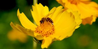 Cum se prepara in mod corect polenul de albine cu miez de nuca, medicamentul natural considerat un veritabil panaceu