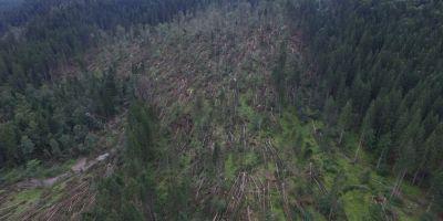 Peste doua mii de hectare de padure au fost puse la pamant de o furtuna puternica