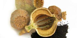 Ceaiul de seminte de mac previne osteoporoza