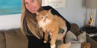 O pisica a strabatut 19 kilometri pentru a se intoarce acasa, dar proprietarii au vrut sa o eutanasieze