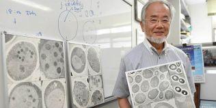 Dieta japonezului laureat cu premiul Nobel: ajuta la scaderea in greutate si regenerarea celulara
